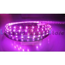 Fita LED Pink / Púrpura com fundo Branco SMD 5050 - IP20 (Uso interno) - 5 Metros